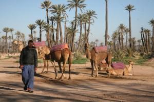 marrakech bis 563