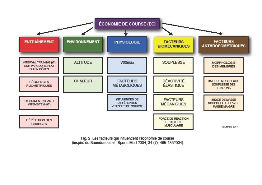 Fig. 2 Les facteurs limitants qui influencent l'économie de course (Inspiré de Saunders et al., Sports Med 2004 ; 34 (7) : 465-4852004